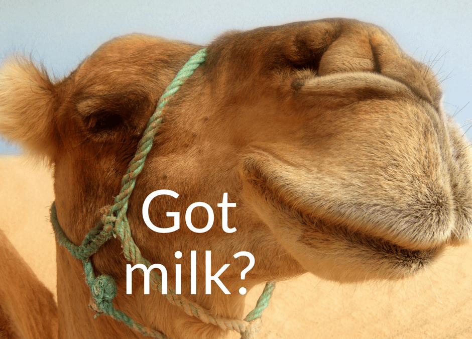 Camel Milk health benefits