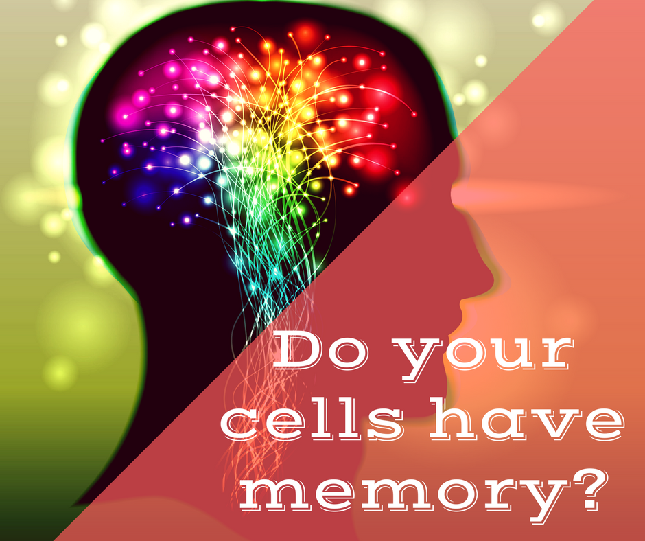 What is cellular memory